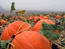 Pumpkin Patch Church Wilmington Nc by 1547 Best Love North Carolina Images On Pinterest Landscapes