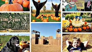 Northern Illinois Pumpkin Patches by Chicago Area Pumpkin Patches 40 To Choose From Chicago Tribune