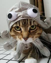 costume for cat cat diy costumes brit co