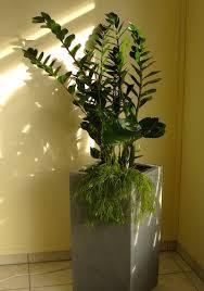 feng shui und die wirkung der pflanzen
