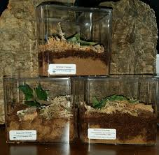 Pumpkin Patch Tarantula For Sale by Products Archive