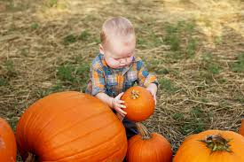 Pumpkin Patch Austin Texas 2015 by 5 Tips For Fabulous Pumpkin Patch Photos Buda Photographer
