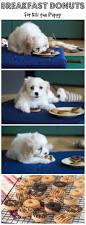 Luckys Bed And Biscuit by 192 Best My Pups Images On Pinterest Pup Dog Stuff And Pet Care