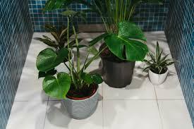 welche pflanzen eignen sich fürs badezimmer