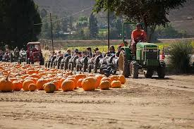 Pumpkin Patch Animal Farm In Moorpark California by Best Pumpkin Patches In And Around Los Angeles Best Family