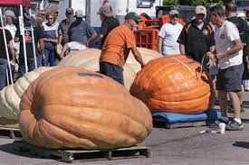 Worlds Heaviest Pumpkin Pie by World Record Pumpkins What Does It Take To Grow Them Csmonitor Com