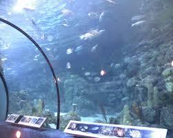 Moody Gardens – Aquarium Pyramid Person Success