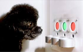 How Dogs See the World The Evolutionary Story of Color Vision