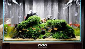 Simon's Aquascape Blog September 2010 Aquascape Of The Month Sky Cliff Aquascaping How To Set Up A Planted Aquarium Design Desiging Tank Basic Forms Aqua Rebell Suitable Plants With Picture Home Mariapngt Nature With Hd Resolution 1300x851 Designs Unique Hardscape Ideas And Fnitures Tag Wallpapers Flowers Beautiful Garden Best 25 Aquascaping Ideas On Pinterest From Start To Finish By Greg Charlet
