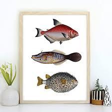 din a4 kunstdruck ungerahmt bunte fische fisch trio retro