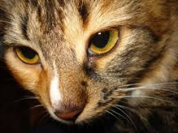 renal failure in cats kidney failure in cats symptoms and treatment