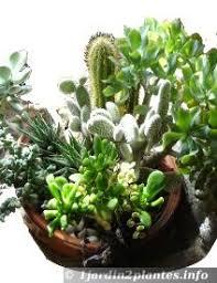entretien plante grasse d interieur jacinthe entretien arrosage à noel