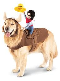 Halloween Costumes Memoirs Of A by 160 Best Halloween For Pets Images On Pinterest Beautiful