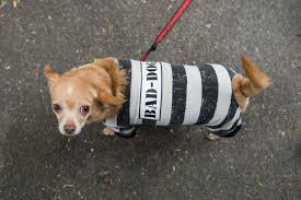 Tompkins Square Park Halloween Dog Parade 2015 by Scenes From The 25th Annual Tompkins Square Halloween Dog Parade