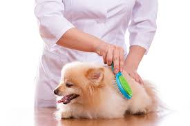 Great Pyrenees Excessive Shedding by Amazon Com Dog Hair Brush U0026 Rubber Dog Hair Remover By Boshel 2