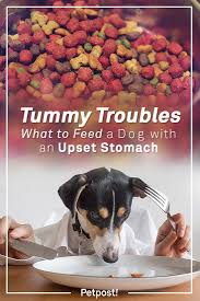 Pumpkin Rice For Dog Diarrhea by What To Feed A Dog With An Upset Stomach Petpost Petpost