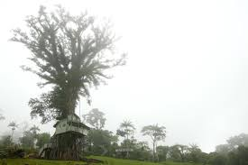 100 Dream Houses In The World Coolest Tree In 13 Most Amazing Homes