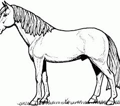Horse Coloring Page Horses Pages Free Sheets