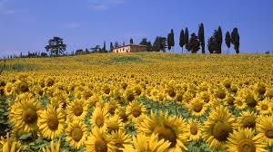 Nature Valleys Italy Tuscany Wallpaper