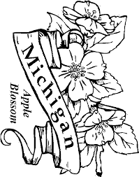 Michigan State Flower Coloring Printable