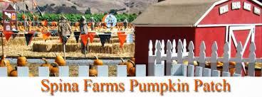 Morgan Hill California Pumpkin Patch by The Almaden Acorn Its Pumpkin Time In Almaden Valley