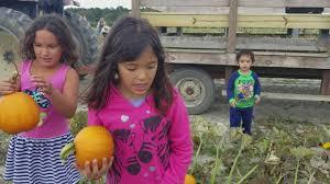 Pumpkin Picking Nj Corn Maze by Pumpkin Picking At R And J Farm In Eeg Harbor Tws Nj Youtube