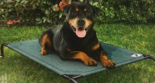 coolaroo pet bed extra large heritage green 132 x 94 cm