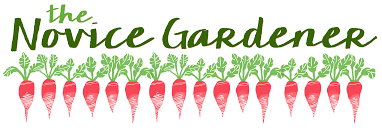 Pinetree Garden Seeds – THE YEAR ROUND SOURCE FOR THE HOME