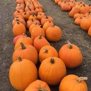 Half Moon Bay Pumpkin Patches 2015 by Farmer John U0027s Pumpkin Farm 75 Photos U0026 74 Reviews Pumpkin