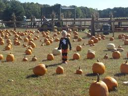 Pumpkin Picking In Chester Nj by New Jersey Pumpkin Patches Our Favorite Pumpkin Picking Spots