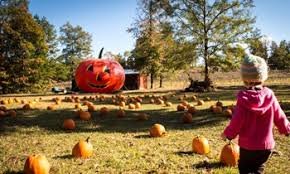 Tallahassee Pumpkin Patch by Pumpkin Patch Express Presented By Heart Of Dixie Railroad Museum