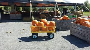 Pumpkin Patch Hayrides Lancaster Pa by 10 Best Pumpkin Patches In Pennsylvania 2016