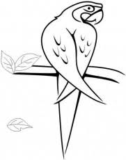 Jamaica Bird Colouring Pages Page 3