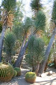 Moorten Botanical Garden Palm Springs All You Need to Know