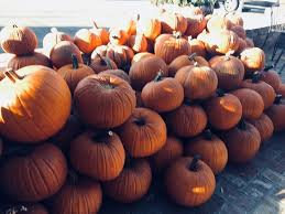 Pumpkin Patches Near Bakersfield Ca by Murray Family Farms Bakersfield Ca Top Tips Before You Go