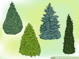 Balsam Christmas Tree Care by How To Set Up A Christmas Tree 13 Steps With Pictures Wikihow