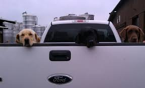 Three Dog Truck By RoadTripDog On DeviantArt Alberta Spca Opens Invesgation After Photos Show Dogs Above Dog Truck Stock Photos Royalty Free Images Travel Hammock Back Seat Cover Protect Your Car Or Is It Legal In Washington To Drive With Your Dog Loose Bed Harness Korrectkritterscom Angry Truck Driver Stock Image Image Of Commuting 35342397 Scania T Rjl Mad Dog Truck Skin 130 Euro Simulator 2 Mods Found Wearing A Jacket What Was The Pocket Led Traveling Pet This Holiday Part 4 Mckinney Animal Tree Roots Tampa Food Trucks Roaming Hunger Facilities Great Of Cute Dogs