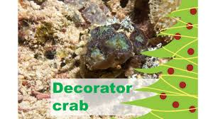 Decorator Crabs And Sea Sponges by Beach Chair Scientist U2014 Marine U0026 Freshwater Environmental Education