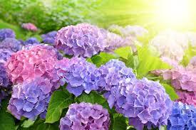 774 best fleurs de tous les couleur images on Pinterest