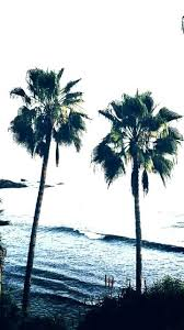 Wallpaper Palm Trees Black And White Tree 6