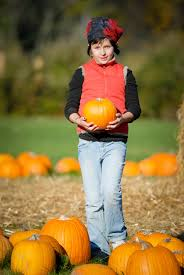 Visalia Mooney Pumpkin Patch by Around Town Local Hanfordsentinel Com
