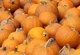 Pumpkin Patch Cincinnati by The Great Pumpkin Patch List Of 2014 Cincinnati Refined