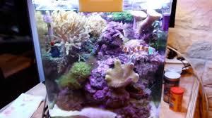 aquarium nano eau de mer dennerle 60 litres eau de mer