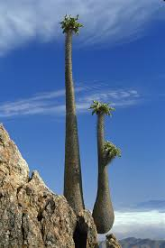 Oceanos Sinking Moss Hills by 7 Most Mysterious Places On Earth Socotra Mysterious Places And