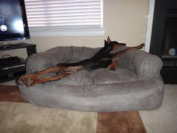Drs Foster And Smith Dog Beds by The Famous Dog Bed Doberman Chat Forum