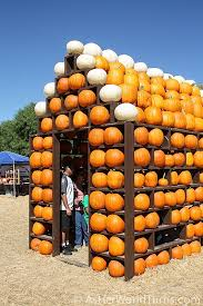 Pumpkin Patch Animal Farm In Moorpark California by Pumpkin Patch Visit As Her World Turns
