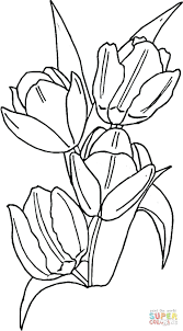 Download Coloring Pages Tulip