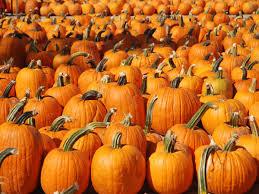 Kent Farms Pumpkin Patch by 24 Pumpkin Patches Near Washington D C Mapped