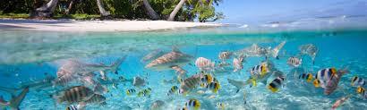 100 Five Star Resorts In Maldives Luxury Holidays Luxury Hotels
