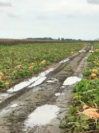 Schaake Pumpkin Patch by Schaake U0027s Pumpkin Patch Home Facebook